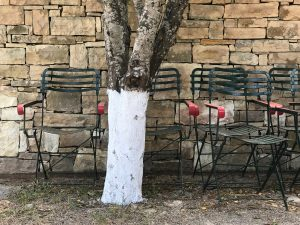 White painted olive tree 1