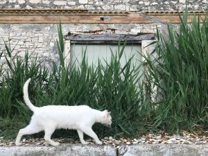 Old olive oil factory with cat. 2