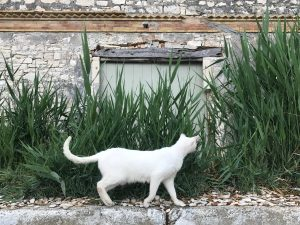 Old olive oil factory with cat. 3