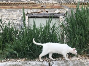 Old olive oil factory with cat. 4