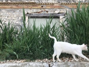 Old olive oil factory with cat. 5