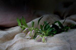 Greek Sweet Peas