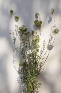 Rescued seed heads